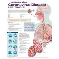 Understanding Coronavirus Disease Chart